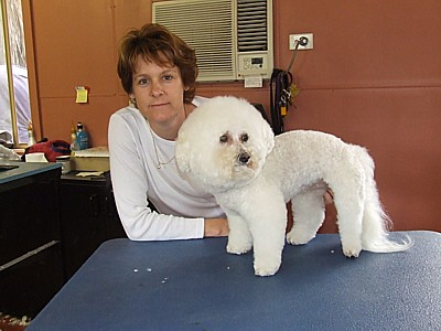 Narie who gave this Bichon Frise a complete scissor clip