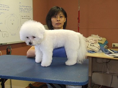 Nancy - Dog grooming student from Malaysia